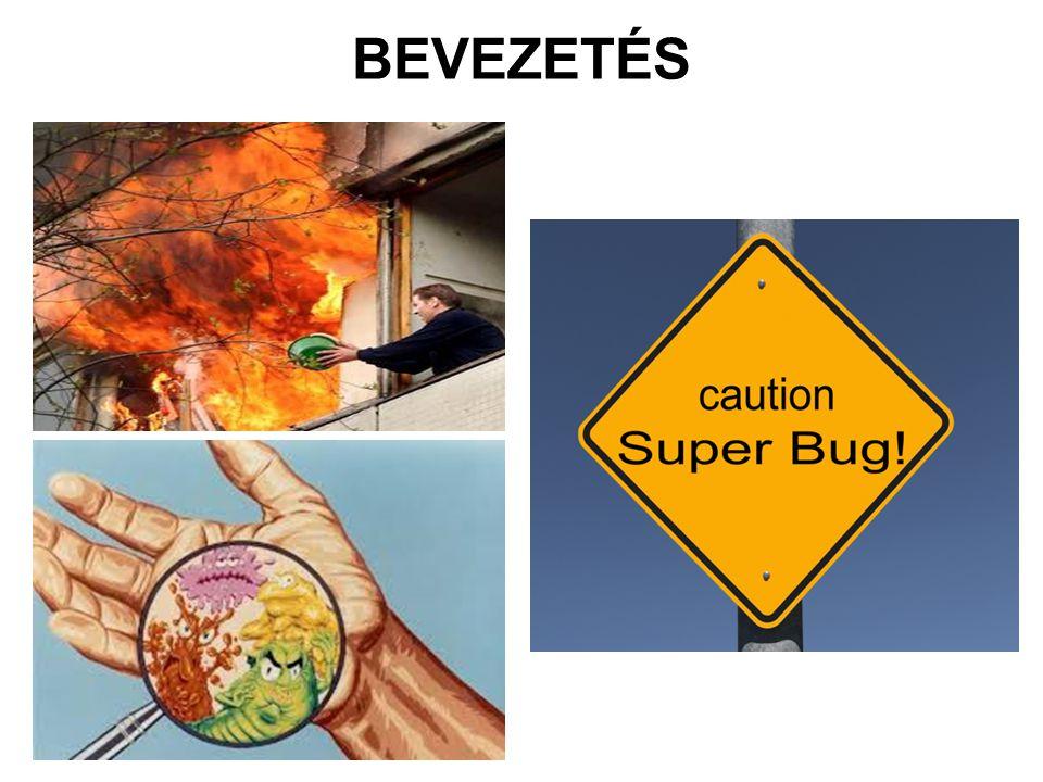 BEVEZETÉS (2)