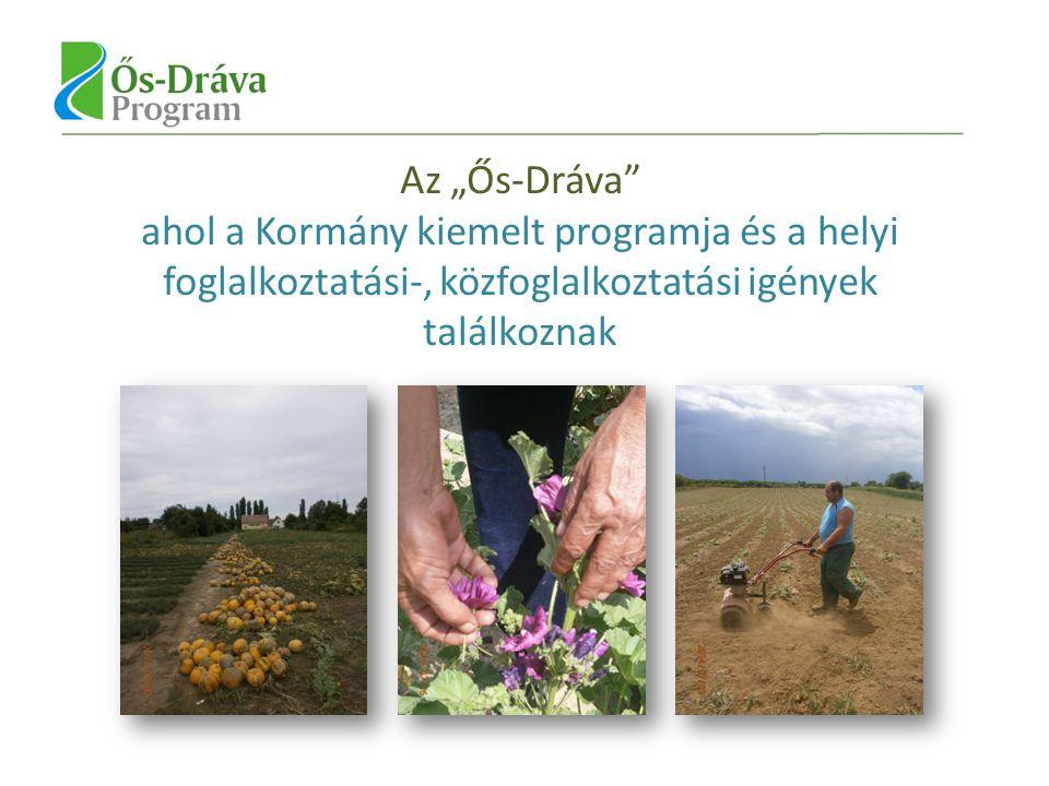 Ős-Dráva Program néhány fontosabb eleme és a közfoglalkoztatás Állattenyésztés F eldolgozás Ős-Dráva/Ormánság Védjegy bevezetése Szociális szövetkezetek magalakulása Helyi termékek Külső segítség nélkül is működő rendszerek kialakulása Ős-Dráva Hitelprogram (Szentlőrinc-Ormánság Takarékszövetkezet) KKV szektor Kultúra és idegenforgalom (Látogatóközpont, templomok, kerékpáros turizmus) Hova szeretnénk eljutni?