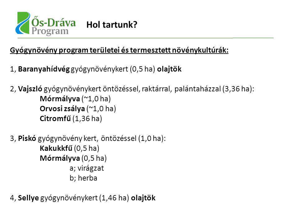 Gyógynövény program területei és termesztett növénykultúrák: 1, Baranyahídvég gyógynövénykert (0,5 ha) olajtök 2, Vajszló gyógynövénykert öntözéssel, raktárral, palántaházzal (3,36 ha): Mórmályva (~1,0 ha) Orvosi zsálya (~1,0 ha) Citromfű (1,36 ha) 3, Piskó gyógynövény kert, öntözéssel (1,0 ha): Kakukkfű (0,5 ha) Mórmályva (0,5 ha) a; virágzat b; herba 4, Sellye gyógynövénykert (1,46 ha) olajtök Hol tartunk