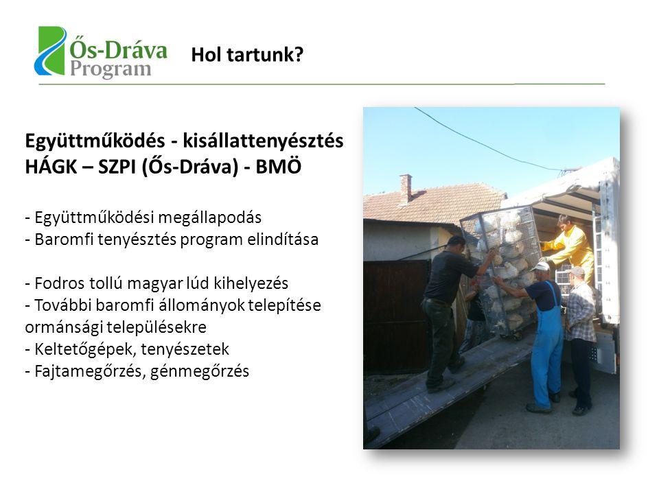 Együttműködés - kisállattenyésztés HÁGK – SZPI (Ős-Dráva) - BMÖ - Együttműködési megállapodás - Baromfi tenyésztés program elindítása - Fodros tollú magyar lúd kihelyezés - További baromfi állományok telepítése ormánsági településekre - Keltetőgépek, tenyészetek - Fajtamegőrzés, génmegőrzés