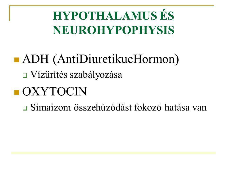HYPOTHALAMUS ÉS NEUROHYPOPHYSIS ADH (AntiDiuretikucHormon)  Vízürítés szabályozása OXYTOCIN  Simaizom összehúzódást fokozó hatása van