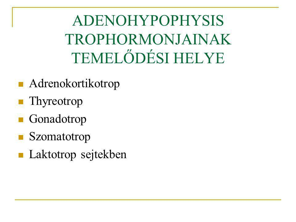 ADENOHYPOPHYSIS TROPHORMONJAINAK TEMELŐDÉSI HELYE Adrenokortikotrop Thyreotrop Gonadotrop Szomatotrop Laktotrop sejtekben