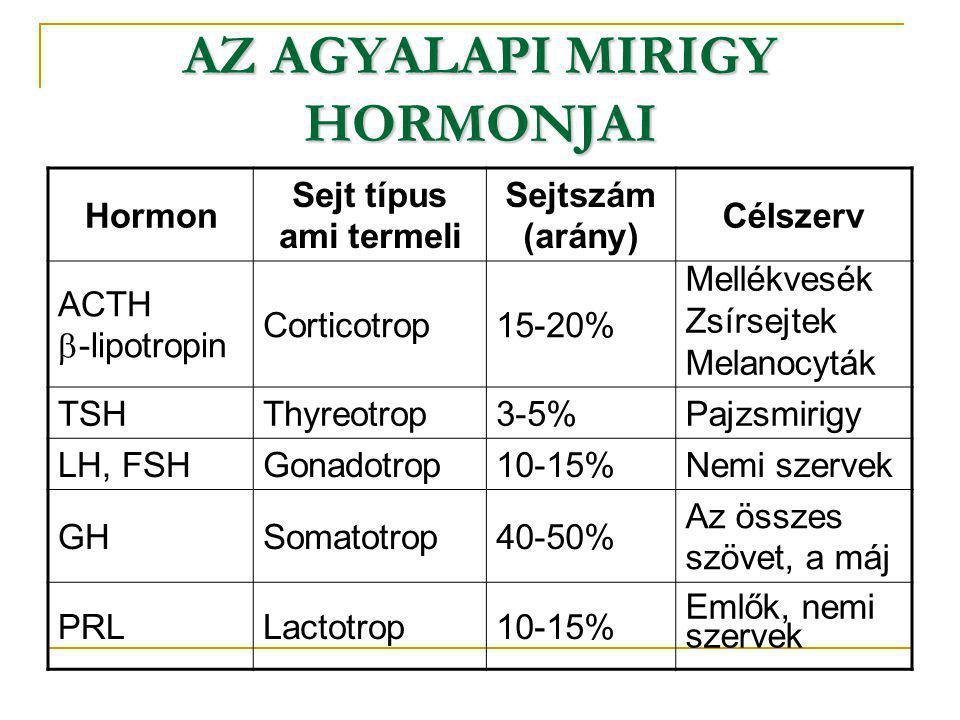 Hormon Sejt típus ami termeli Sejtszám (arány) Célszerv ACTH  -lipotropin Corticotrop15-20% Mellékvesék Zsírsejtek Melanocyták TSHThyreotrop3-5%Pajzs