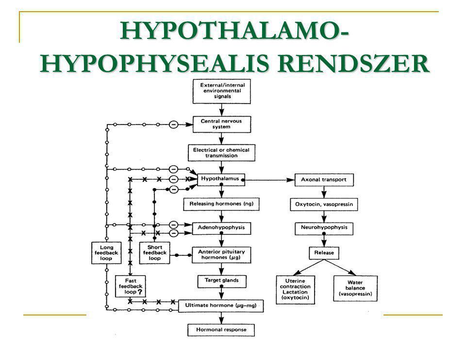 HYPOTHALAMO- HYPOPHYSEALIS RENDSZER
