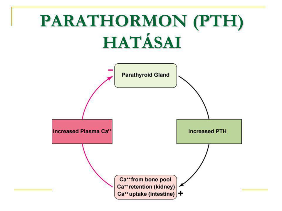 PARATHORMON (PTH) HATÁSAI