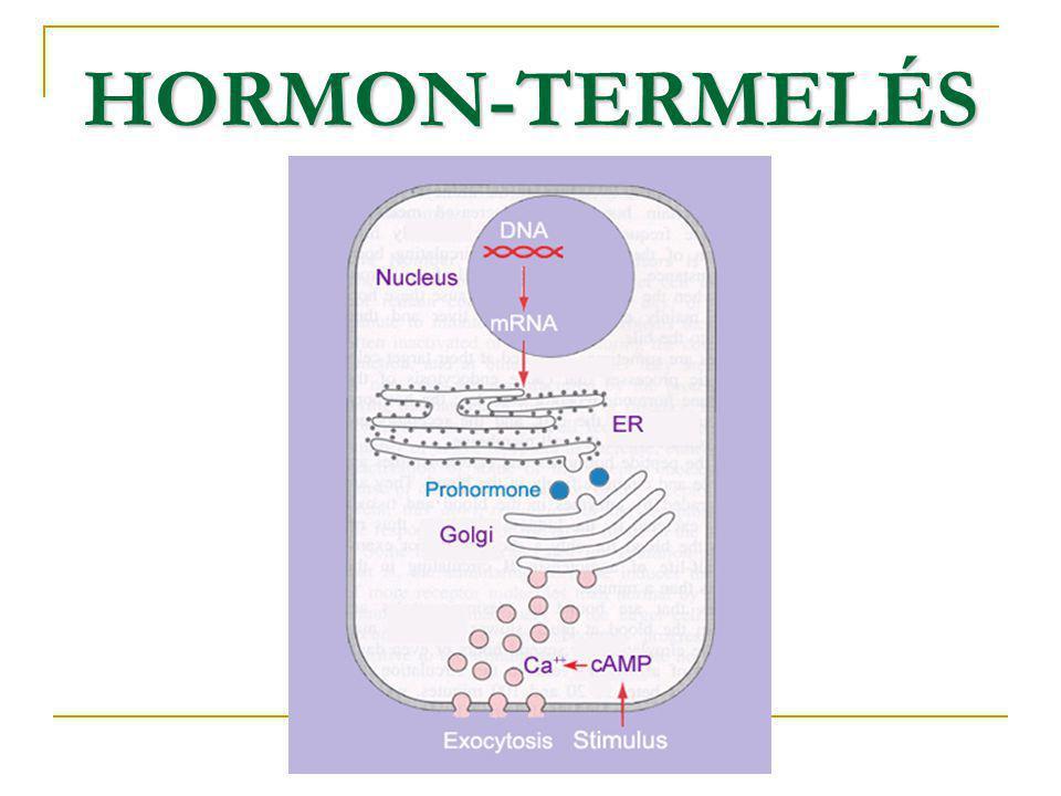 HORMON-TERMELÉS