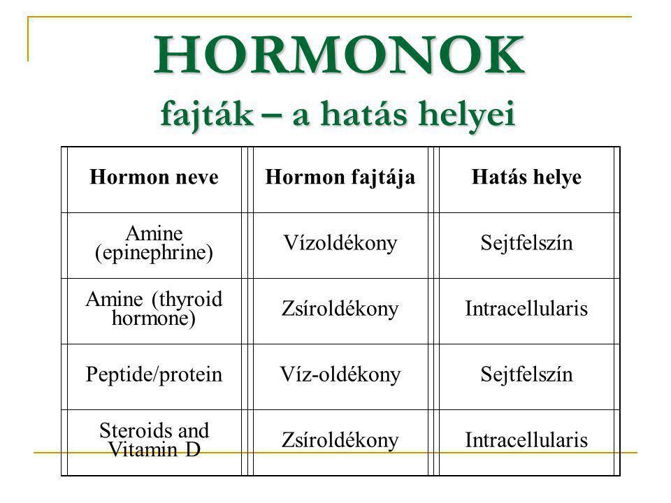 Hormon neveHormon fajtájaHatás helye Amine (epinephrine) VízoldékonySejtfelszín Amine (thyroid hormone) ZsíroldékonyIntracellularis Peptide/proteinVíz