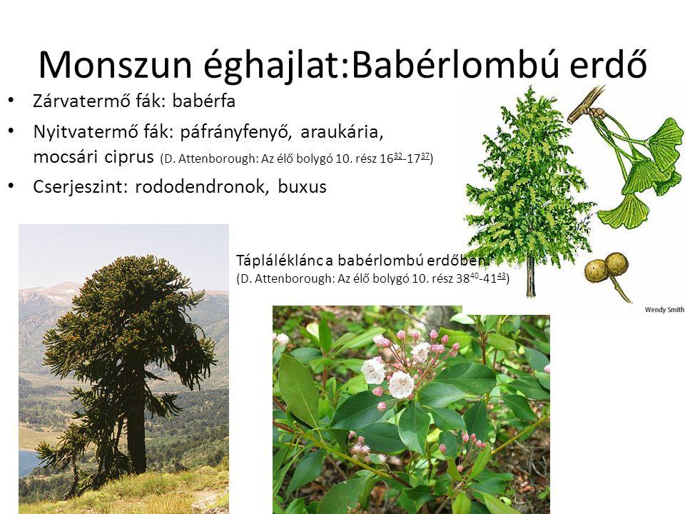 Monszun éghajlat:Babérlombú erdő Zárvatermő fák: babérfa Nyitvatermő fák: páfrányfenyő, araukária, mocsári ciprus (D. Attenborough: Az élő bolygó 10.
