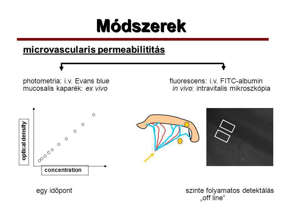 Módszerek photometria: i.v.Evans blue fluorescens: i.v.