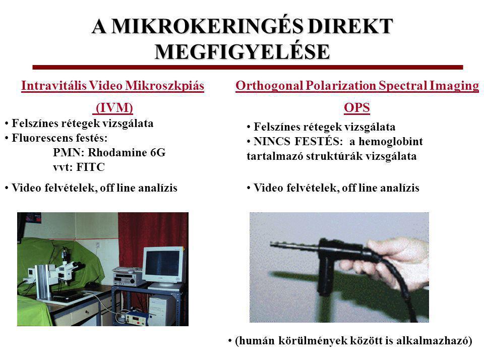 A MIKROKERINGÉS DIREKT MEGFIGYELÉSE Orthogonal Polarization Spectral Imaging OPS Intravitális Video Mikroszkpiás (IVM) Video felvételek, off line analízis Felszínes rétegek vizsgálata NINCS FESTÉS: a hemoglobint tartalmazó struktúrák vizsgálata Felszínes rétegek vizsgálata Fluorescens festés: PMN: Rhodamine 6G vvt: FITC (humán körülmények között is alkalmazhazó)