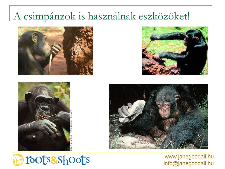 www.janegoodall.hu info@janegoodall.hu A csimpánzok is használnak eszközöket!