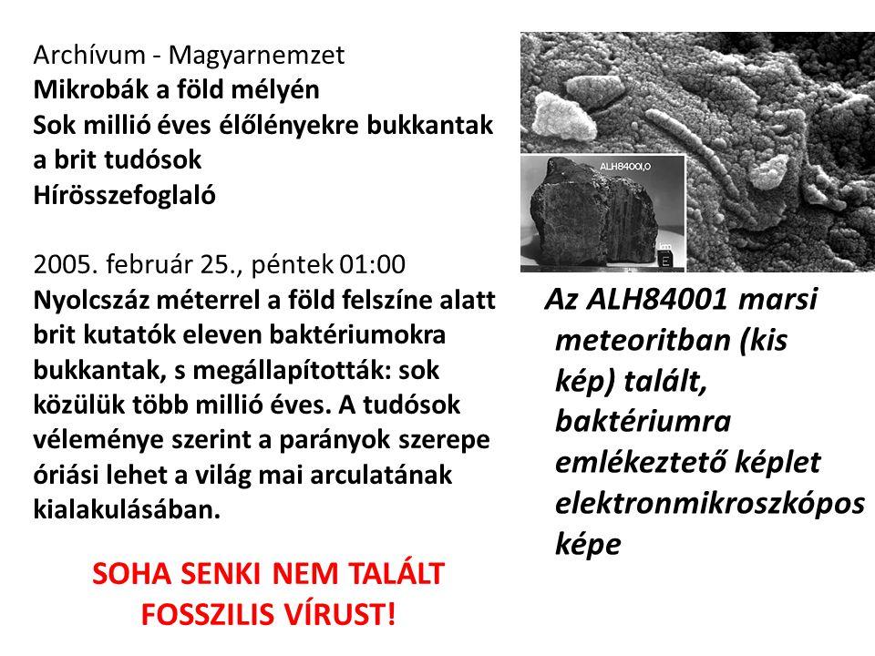 Az ALH84001 marsi meteoritban (kis kép) talált, baktériumra emlékeztető képlet elektronmikroszkópos képe Archívum - Magyarnemzet Mikrobák a föld mélyé
