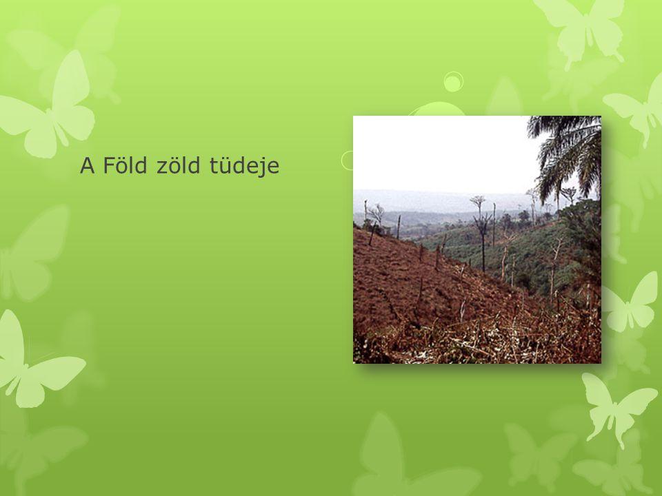 A Föld zöld tüdeje