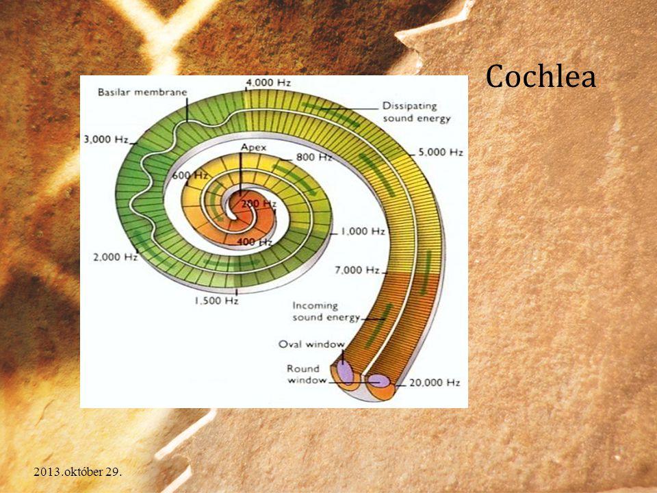 2013.október 29. Cochlea