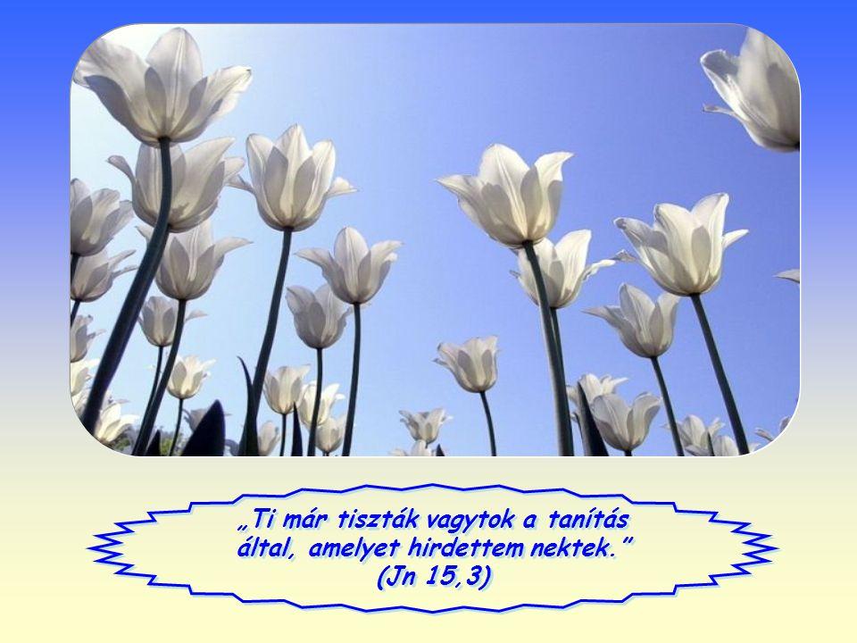 """""""Ti már tiszták vagytok a tanítás által, amelyet hirdettem nektek. (Jn 15,3)"""