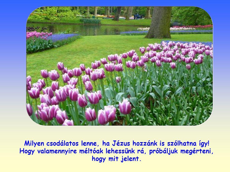 Milyen csodálatos lenne, ha Jézus hozzánk is szólhatna így.