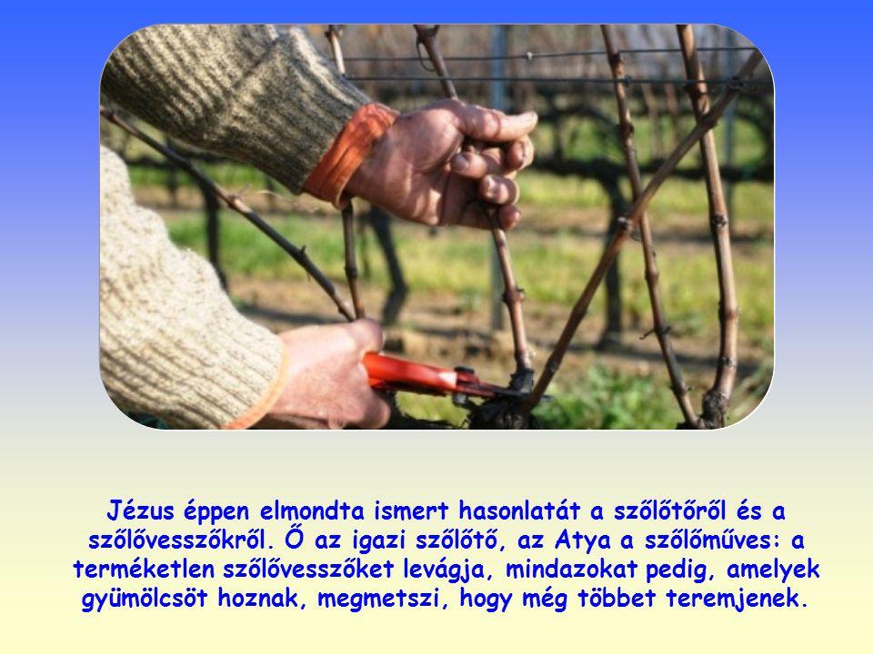 Jézus éppen elmondta ismert hasonlatát a szőlőtőről és a szőlővesszőkről.