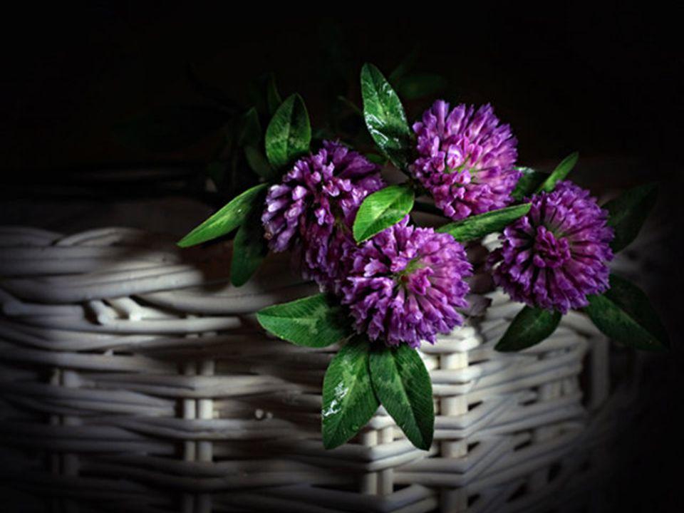 Ezen kívül baráti kapcsolatokat sem szabad elhanyagolni, ápolni kell, mert olyan, mint a növény: napi ápolást igényel.