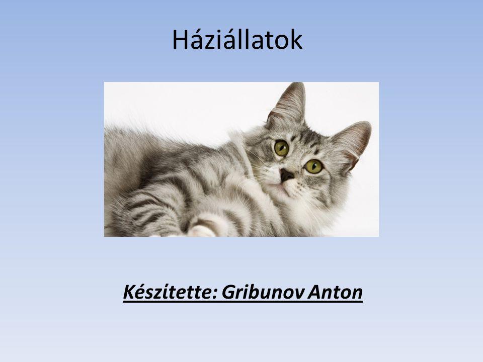 Háziállatok Készίtette: Gribunov Anton
