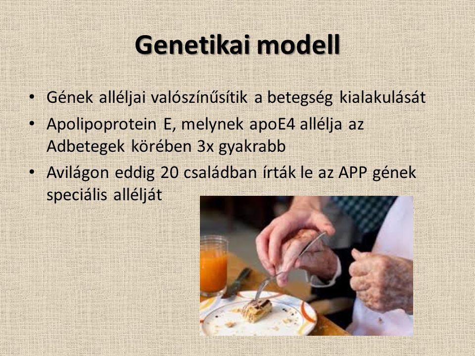 Genetikai modell Gének alléljai valószínűsítik a betegség kialakulását Apolipoprotein E, melynek apoE4 allélja az Adbetegek körében 3x gyakrabb Avilágon eddig 20 családban írták le az APP gének speciális allélját