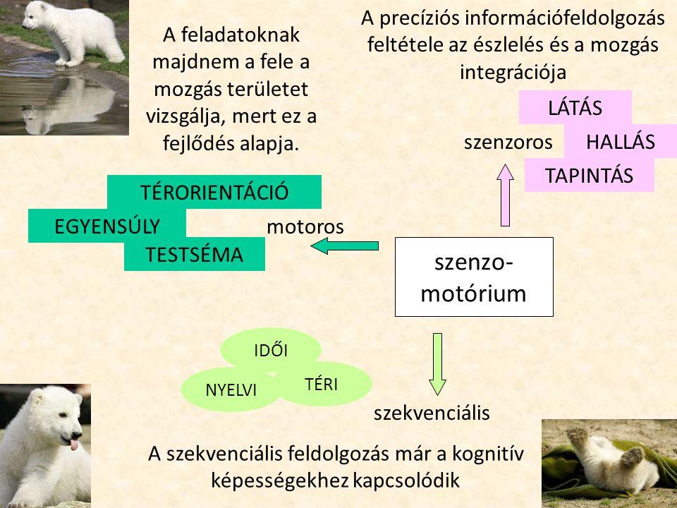 Szekvencialitás IDŐI Idői viszonyok, időtartamok nagysága, egymással való összefüggése, szekvenciális emlékezet cselekvéssel képzeletben 22.