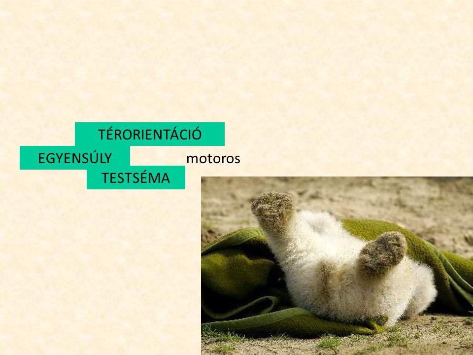 Motoros terület Testrészek azonosítása Oldaliság Testrészek mozgatása Ujjak mozgatása TESTSÉMA 4.