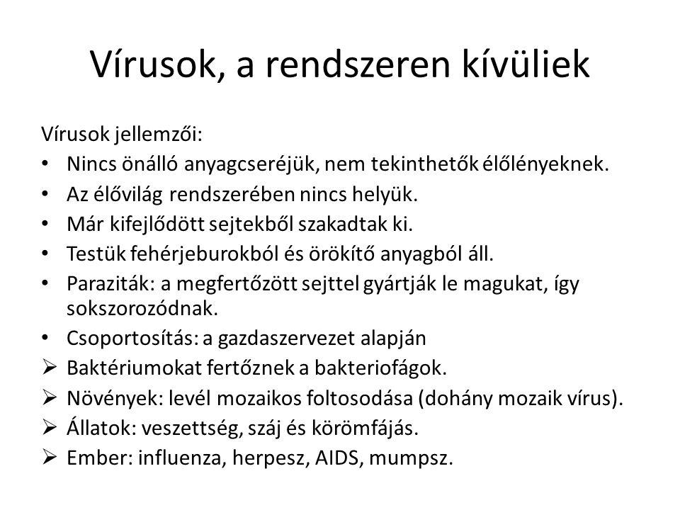 Vírusok felépítése
