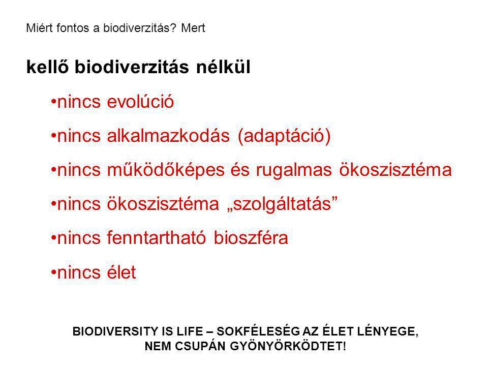 """kellő biodiverzitás nélkül nincs evolúció nincs alkalmazkodás (adaptáció) nincs működőképes és rugalmas ökoszisztéma nincs ökoszisztéma """"szolgáltatás"""""""