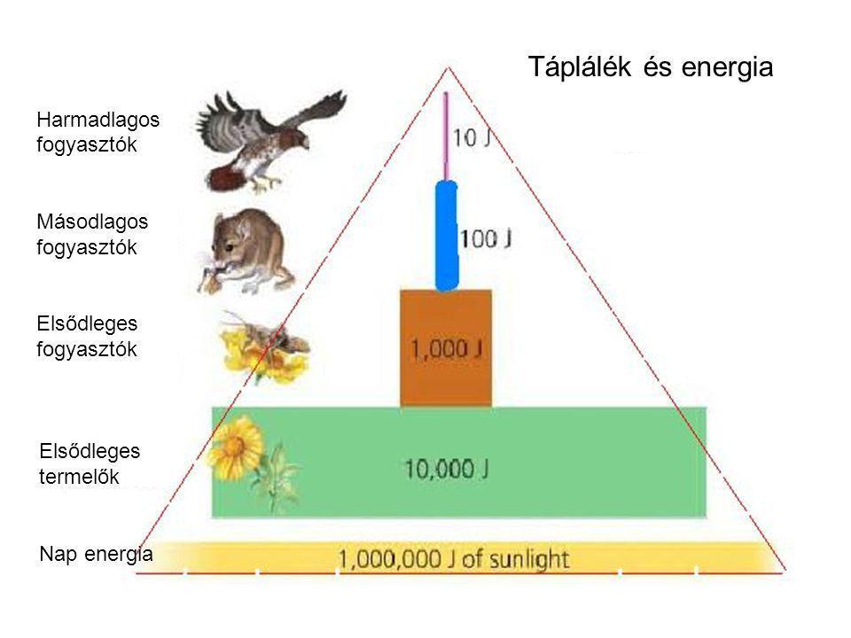 Elsődleges termelők Nap energia Harmadlagos fogyasztók Másodlagos fogyasztók Elsődleges fogyasztók Táplálék és energia