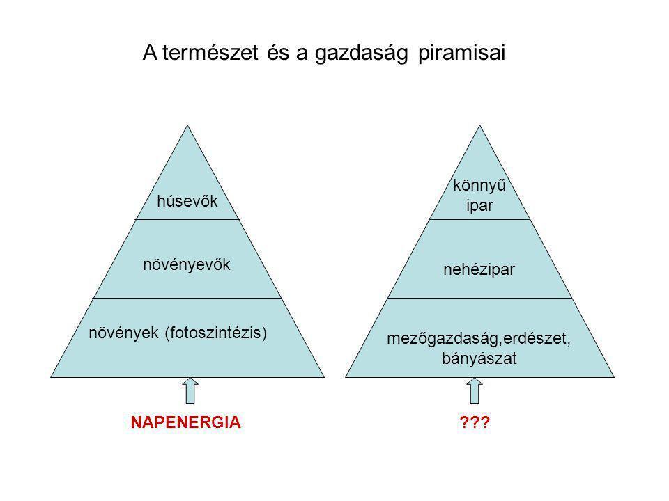 növények (fotoszintézis) növényevők húsevők mezőgazdaság,erdészet, bányászat nehézipar könnyű ipar A természet és a gazdaság piramisai NAPENERGIA ???
