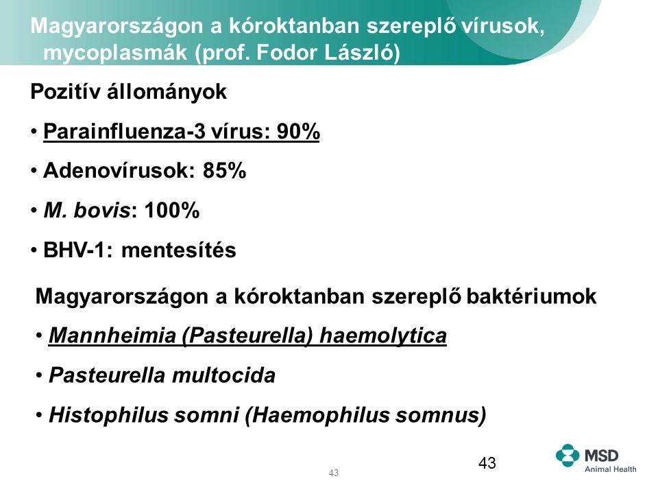 43 Magyarországon a kóroktanban szereplő vírusok, mycoplasmák (prof. Fodor László) Pozitív állományok Parainfluenza-3 vírus: 90% Adenovírusok: 85% M.