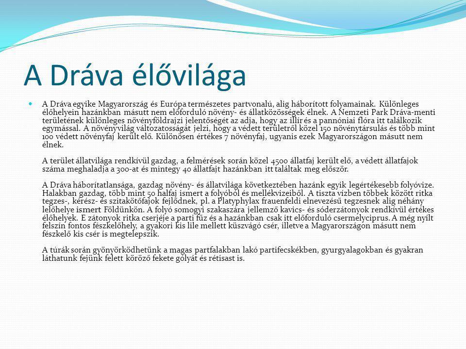 A Dráva élővilága A Dráva egyike Magyarország és Európa természetes partvonalú, alig háborított folyamainak. Különleges élőhelyein hazánkban másutt ne