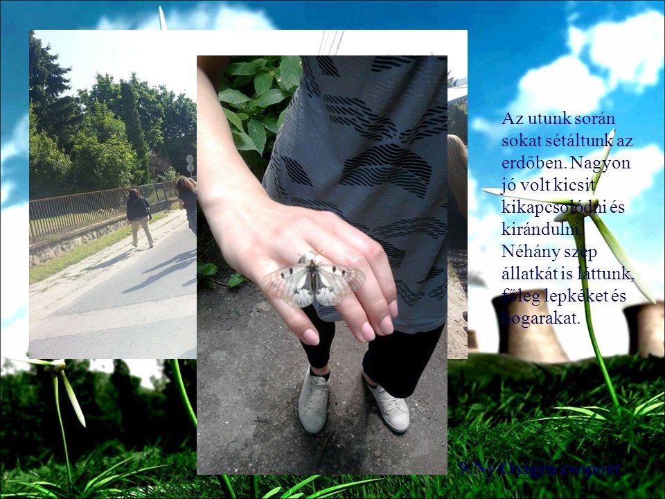 9.Ny Oxigén csoport Az utunk során sokat sétáltunk az erdőben.