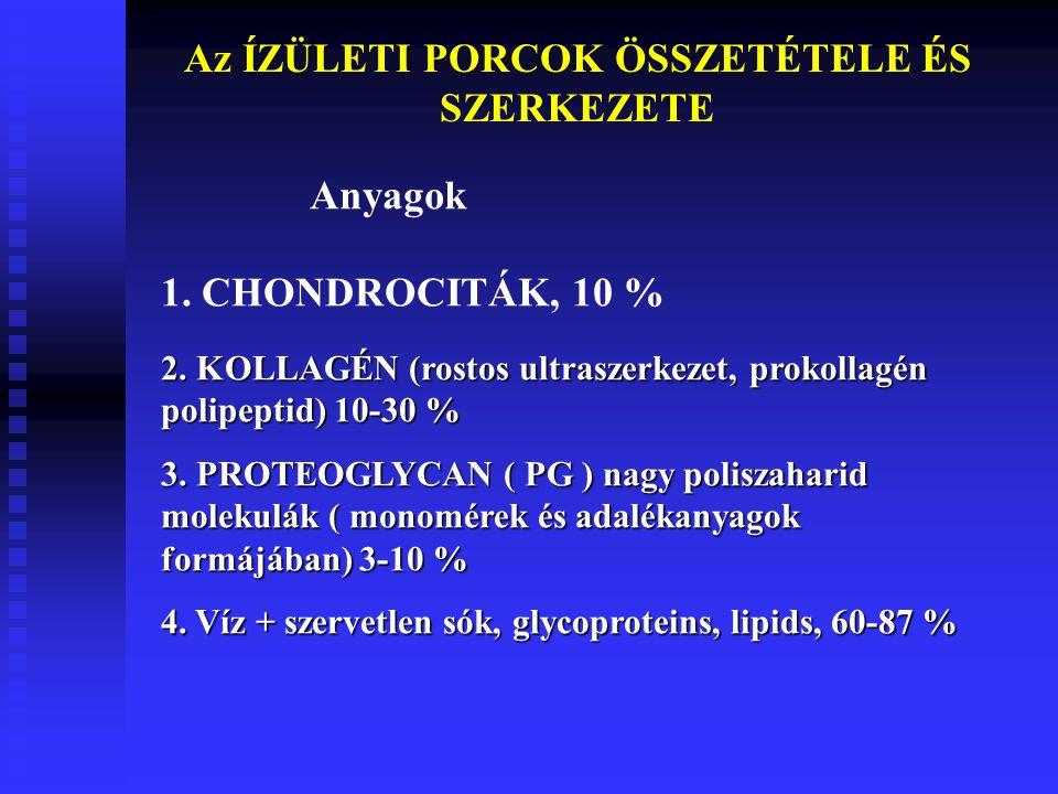 Az ÍZÜLETI PORCOK ÖSSZETÉTELE ÉS SZERKEZETE 2.