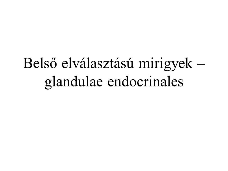 Hypophysis elülső lebenye Elülső lebeny hormonok Perifériás endocrin mirigyek Perifériás endocrin mirigyek hormonja Célsejt Releasing hormonok