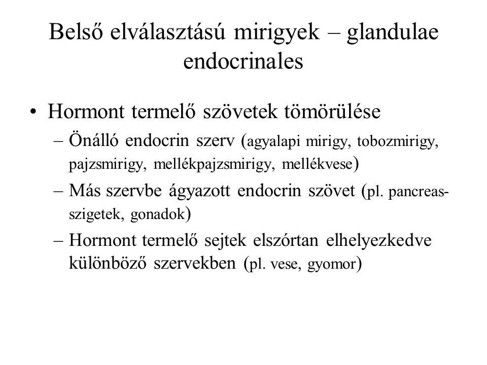 Belső elválasztású mirigyek – glandulae endocrinales Belső elválasztású mirigyek 1.Tobozmirigy 2.Agyalapi mirigy 3.Pajzsmirigy és mellékpajzsmirigyek 5.Mellékvesék 4.Csecsemő mirigy 6.Hasnyálmirigy (Langerhans-szigetek) 7.Petefészkek 8.Herék