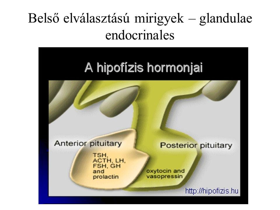 TSH – thyreotrop hormon – pajzsmirigy ACTH – adrenocorticotrop hormon – mellékvese kéreg LH – luteinizáló hormon – petefészek FSH – folliculust serkentő hormon – petefészek STH – somatotrop hormon – növekedés LTH – lactotrop hormon – tejmirigyek MSH – melanocytákat serkentő hormon