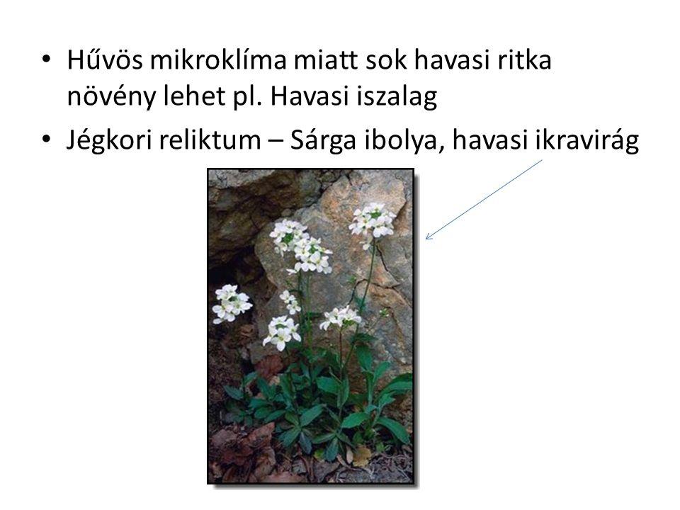 Hűvös mikroklíma miatt sok havasi ritka növény lehet pl. Havasi iszalag Jégkori reliktum – Sárga ibolya, havasi ikravirág