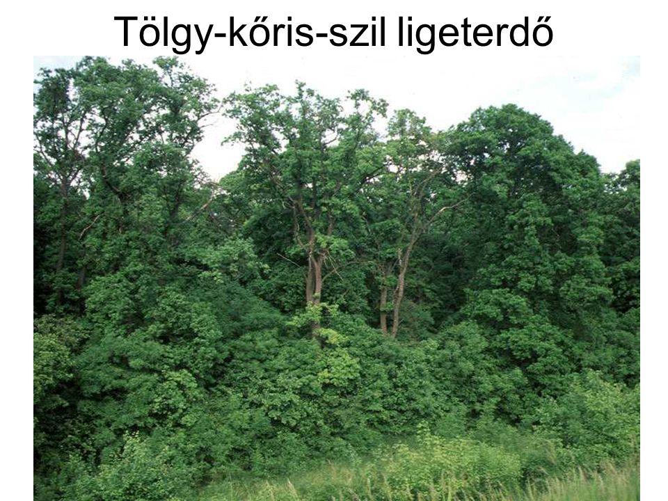 Kocsányos tölgy és kőris Magyar kőris