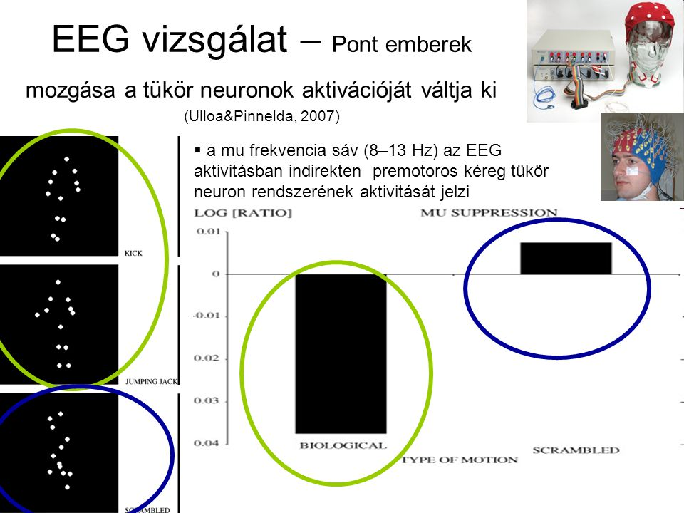 EEG vizsgálat – Pont emberek mozgása a tükör neuronok aktivációját váltja ki (Ulloa&Pinnelda, 2007)  a mu frekvencia sáv (8–13 Hz) az EEG aktivitásban indirekten premotoros kéreg tükör neuron rendszerének aktivitását jelzi v