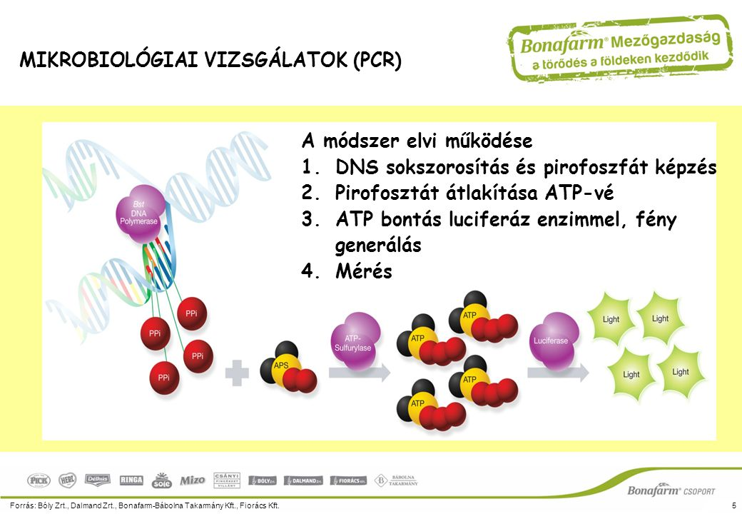Forrás: Bóly Zrt., Dalmand Zrt., Bonafarm-Bábolna Takarmány Kft., Fiorács Kft.5 MIKROBIOLÓGIAI VIZSGÁLATOK (PCR) A módszer elvi működése 1.DNS sokszor