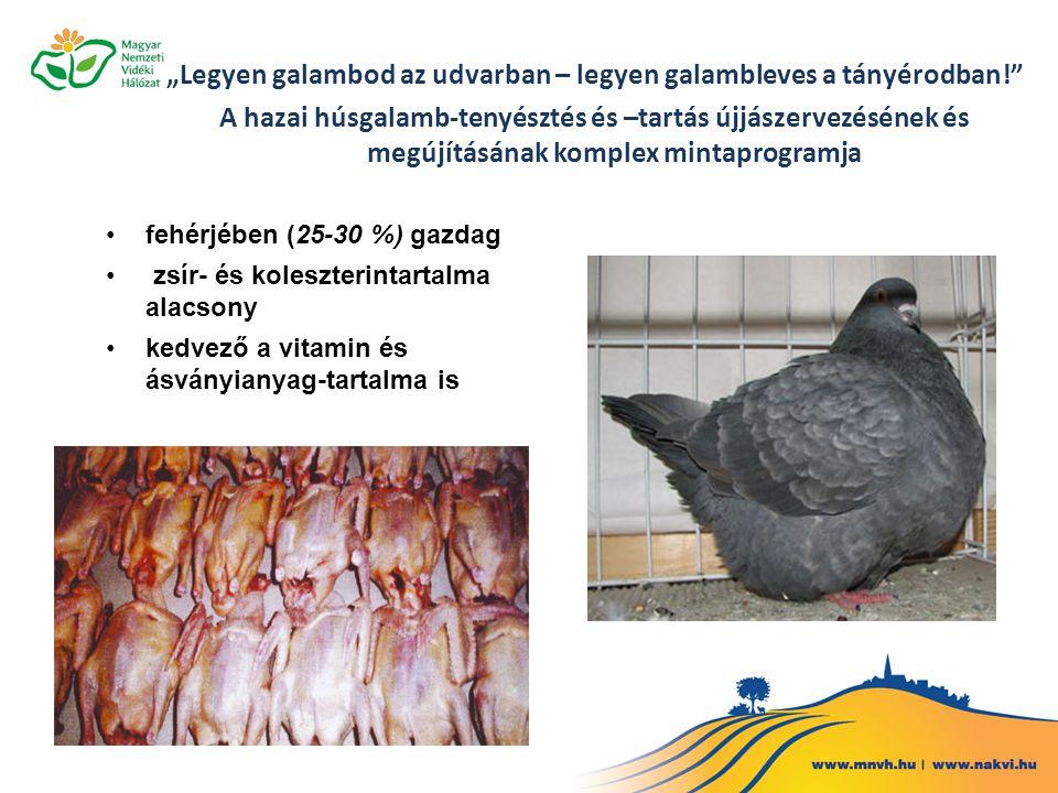 """""""Legyen galambod az udvarban – legyen galambleves a tányérodban!"""" A hazai húsgalamb-tenyésztés és –tartás újjászervezésének és megújításának komplex m"""