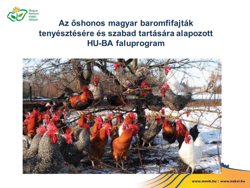 Az őshonos magyar baromfifajták tenyésztésére és szabad tartására alapozott HU-BA faluprogram