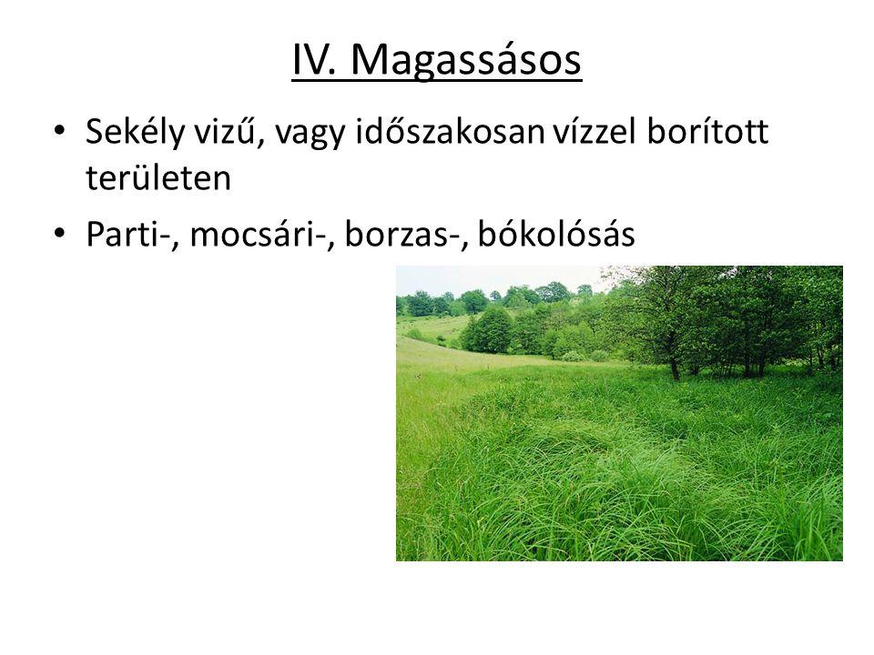 IV. Magassásos Sekély vizű, vagy időszakosan vízzel borított területen Parti-, mocsári-, borzas-, bókolósás