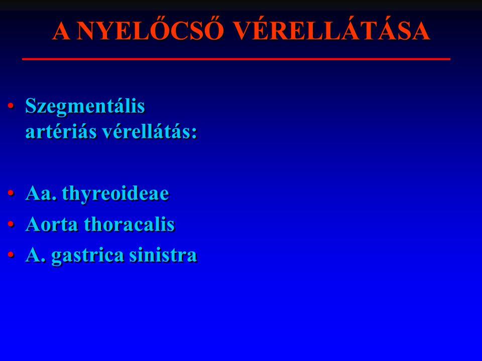 A NYELŐCSŐ VÉRELLÁTÁSA Szegmentális artériás vérellátás: Aa. thyreoideae Aorta thoracalis A. gastrica sinistra Szegmentális artériás vérellátás: Aa. t