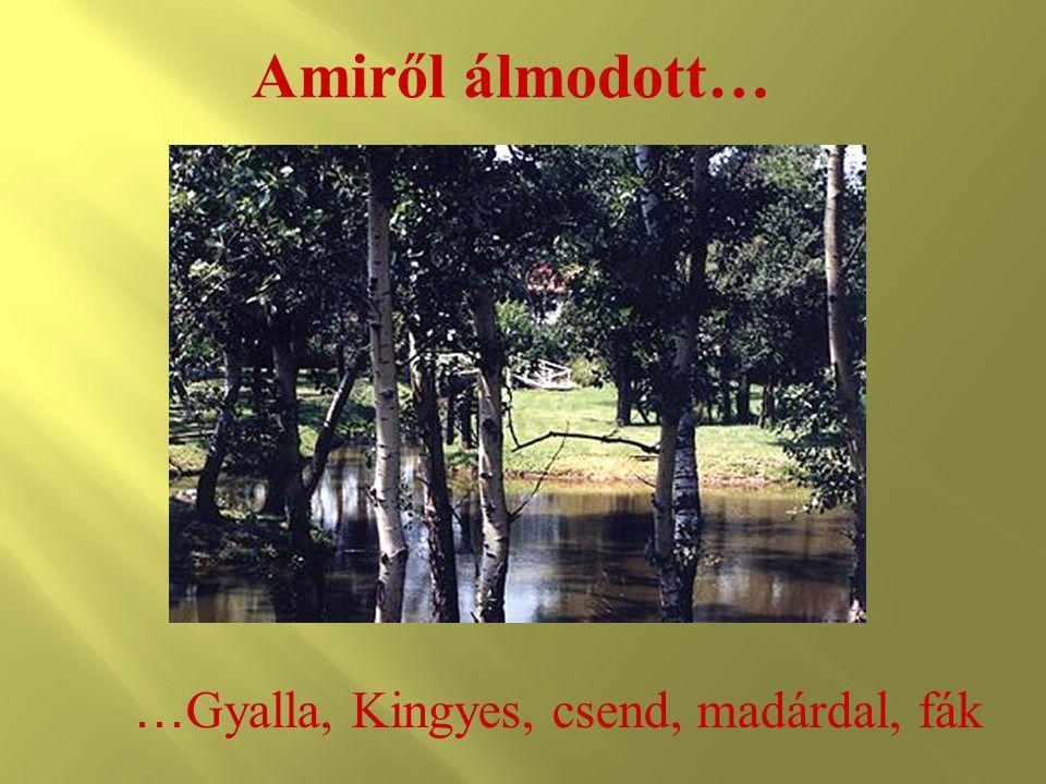 Amiről álmodott… … Gyalla, Kingyes, csend, madárdal, fák