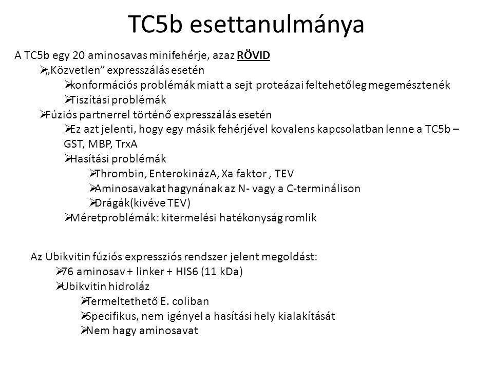 """TC5b esettanulmánya A TC5b egy 20 aminosavas minifehérje, azaz RÖVID  """"Közvetlen expresszálás esetén  konformációs problémák miatt a sejt proteázai feltehetőleg megemésztenék  Tiszítási problémák  Fúziós partnerrel történő expresszálás esetén  Ez azt jelenti, hogy egy másik fehérjével kovalens kapcsolatban lenne a TC5b – GST, MBP, TrxA  Hasítási problémák  Thrombin, EnterokinázA, Xa faktor, TEV  Aminosavakat hagynának az N- vagy a C-terminálison  Drágák(kivéve TEV)  Méretproblémák: kitermelési hatékonyság romlik Az Ubikvitin fúziós expressziós rendszer jelent megoldást:  76 aminosav + linker + HIS6 (11 kDa)  Ubikvitin hidroláz  Termeltethető E."""