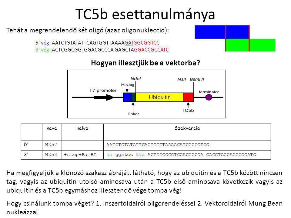 Tehát a megrendelendő két oligó (azaz oligonukleotid): 5' vég: AATCTGTATATTCAGTGGTTAAAAGATGGCGGTCC 3' vég: ACTCGGCGGTGGACGCCCA GAGCTAGGACCGCCATC nevehelyeSzekvencia 5' N257AATCTGTATATTCAGTGGTTAAAAGATGGCGGTCC 3' N258+stop+BamHIaa ggatcc tta ACTCGGCGGTGGACGCCCA GAGCTAGGACCGCCATC Hogyan illesztjük be a vektorba.