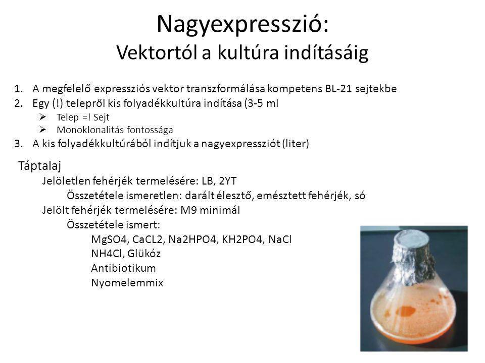 Nagyexpresszió: Vektortól a kultúra indításáig 1.A megfelelő expressziós vektor transzformálása kompetens BL-21 sejtekbe 2.Egy (!) telepről kis folyadékkultúra indítása (3-5 ml  Telep =.