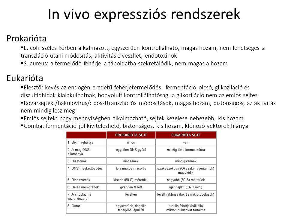 In vivo expressziós rendszerek Prokarióta  E.